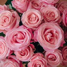 Hermosa in all of her perfectly pink rose glory.