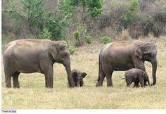 Jim Corbett National Park: Topography  Spread over 1318.54 sq km Corbett Park has 520 sq km as core area and 797.72 sq km as buffer area, which contains reserve forest 496.54 sq km and 301.18 sq km area is of Sonanadi Wildlife Sanctuary. The flat valleys are interspersed with hilly terrains, marshy depressions, rolling grasslands, a lake and rivers flowing through the park help maintain a perfect eco-system balance. The sanctuary has network of roads through the dense forest.