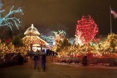Lincoln Park Zoo Lights, Chicago - an amazing spectacle - and FREE! Christmas Events, Christmas Lights, Chicago Christmas, White Christmas, Lincoln Park Zoo Chicago, Zoo Lights, Chicago Museums, Chicago Restaurants, Buckingham Fountain