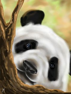 Panda by Veronica Minozzi - Panda Painting - Panda Fine Art Prints and Posters for Sale Black Animals, Cute Animals, Panda Painting, Panda Art, Acrylic Painting For Beginners, Cool Business Cards, Cute Panda, Art Pages, Stone Painting
