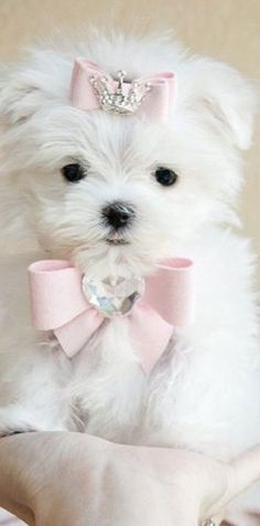 Puppy princesss with #bows