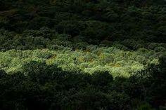 Bosque mediterráneo. Bosque mediterráneo. ‹ anterior siguiente ›.