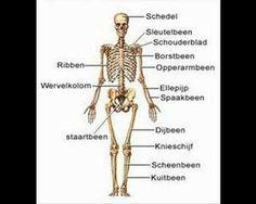 video over de werking van het menselijk lichaam