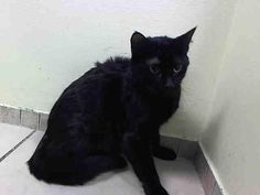"""Harley3-17kill list""""@URGENTPODR: What a load of crap! Dumped by owner to save money, sweet http://fb.me/6yHv0dUg0"""" pic.twitter.com/40fkb9oLFn"""