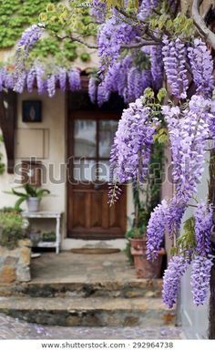 French Village Flowering Purple Wisteria Vine Stock Photo (Edit Now) 292964738 Wisteria Plant, Purple Wisteria, Wisteria Trellis, Garden Gates, Garden Art, Garden Design, Cacti Garden, Landscaping Tips, Front Yard Landscaping