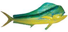 dolphinfish   Cow Dolphin   Dorado Replica   Mahi-Bull Dolphinfish   mounted fish ...