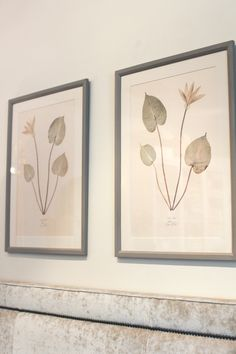Lauren LaChance Botanical Prints | Gorgeous in their simplicity | Botanicals from around the world