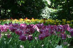 Italy - Parco Giardino Sigurtà (Valeggio sul Mincio)