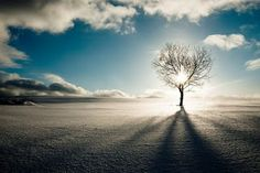 Uma arvore solitária e sol que a toca