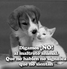 100 Mejores Imágenes De No Al Maltrato Animal Animales