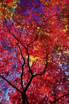 Nature's best colors