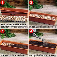 Pflanz-Tray Balkon-O-mat