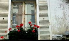 #Roses #window #morning