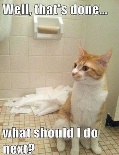 Funny Cat Pics with Captions - 60 the fanniest and the most hilarious pictures! Look other funny and hilarious gifs, videos & pictures of cute cats on site! Funny Animal Pictures, Funny Animals, Cute Animals, Funniest Animals, Crazy Cat Lady, Crazy Cats, I Love Cats, Cute Cats, Adorable Kittens