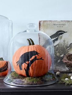 No carve raven pumpkin pumpkin halloween halloween pictures halloween images halloween crafts halloween ideas halloween craft ideas diy halloween crafts no carve