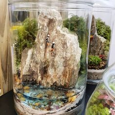 Inspirational terrariums and miniature gardens are the perfect garden pr . Inspirational terrariums and miniature gardens Terrariums are the perfect garden project for humans if you do