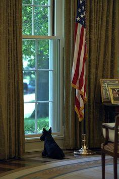 In memory of Barney Bush in the Oval Office !!!