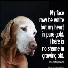 """The great thing about senior dogs is they don't even act """"old."""" They act like calmer adults, but they're still always ready to play. #quote #saying"""