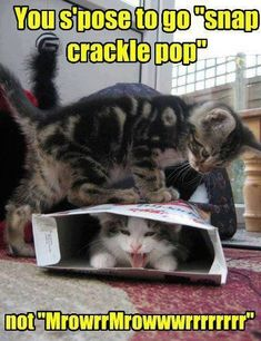 that cat in the box is NOT happy:()