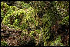 Treebeard by Luigi Mancini #LOTR #Lordoftherings #Ent