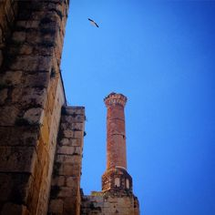 A flying stork can be seen over the minaret of Isa Bey Mosque nearby Ephesus, Turkey. Isa Bey Mosque was built in 1375 and active since then. Mosque hosts on it's minaret nest of the stork can be seen in the picture. Visit, enjoy and remember Isa Bey Mosque with Us! www.bestephesustour.com #ephesus #turkey #ruins #royalcarribean #travel #izmir #istanbul #privatetour #princesscruises #ancient #azamara #archaelogy #silvercruises #stork #selcuk #seabourne #guide #history #hollandamerica…