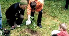 Ted Cook planting Brian Boru oak with Adam O'Donovan and Tom O'Brien in August