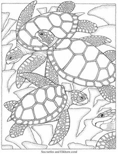 sea turtles and elkhorn coral creative haven seascapes coloring book dover publications - Turtle Coloring Pages For Adults