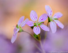Flower Photography Pink Spring Beauty Fine by SoulCenteredPhotoart, $27.00