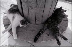 duo de chats endormis  dans la chatterie du Refuge