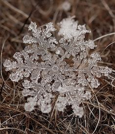 ♕ beautiful photos of real snowflakes captured using macro lens by Russian photographer Andrey Osokin
