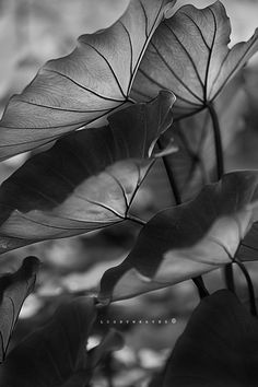 the leaves by Albertd Boban