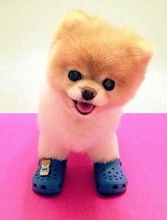 Got my crocs on, and I'm ready for my walk.