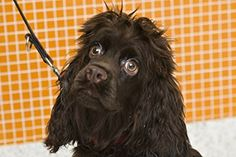 Great dog eye care tips from the ASPCA. Here's another--choose a natural shampoo that's free of harsh chemicals to protect your pup's eyes. #DogGroomingTips #DogSafety