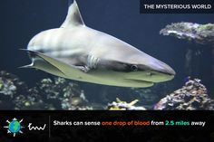 #sharks #ocean #facts