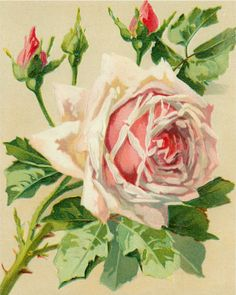 """Fair Perfect Rose"" ~ pink rose & buds, 8"" x 10"" graphic."