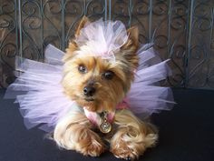 Pretty in Pink Crochet Doggie TuTu dress Hair bow by Frillypaws