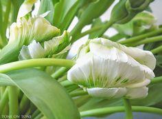 Parrot Tulips via Tone on Tone