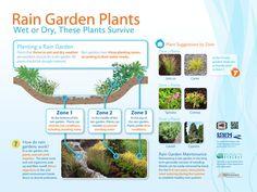 Rain Garden Cross Section | Created new rain garden cross-section graphic.