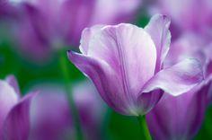 purple flowers - Google Search