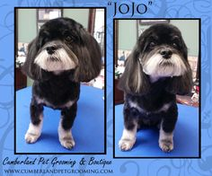 JoJo looks sharp with his new hair style!