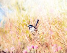bird photography bird wall decor nature by mylittlepixels on Etsy