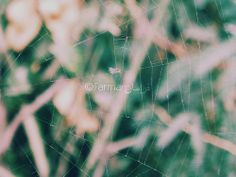 A spider 's web 2