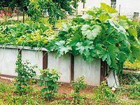 Vysoký záhon se zakládá jako kompost. Zelenina na něm roste výtečně!