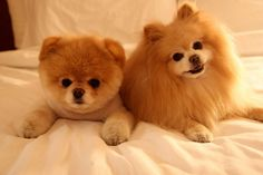 not usually a small dog fan... but who can resist boo and buddy? :)