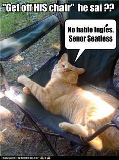 """Get off HIS chair"" he said?? ""No hablo Ingles, Senor Seatless!"""