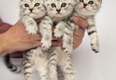 Three Cute Kittens