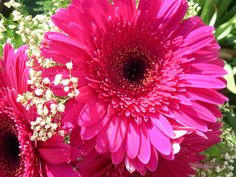 Resultados de la Búsqueda de imágenes de Google de http://4.bp.blogspot.com/-gdfY3IzTZzM/TnJovfiyx8I/AAAAAAAANDQ/PJUV9eVzwB4/s1600/Gerberas-Wedding-Flowers-Wallpaper-3.jpg