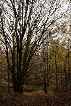 Hertfordshire woodland photo