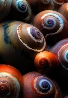 Vivd | Mixed | Color | Colour | цвет | カラー | Couleur | Colore | Sea Shells by Zsaj
