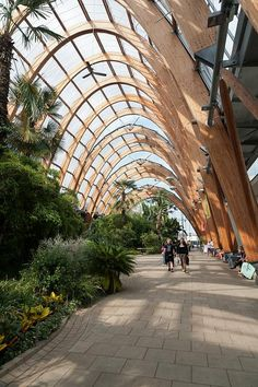 Winter Garden, Sheffield, Yorkshire, England by jacqueline.poggi, via Flickr. (CC BY-NC-ND 2.0)